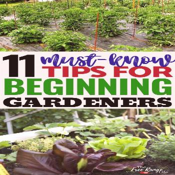 11 Must-Read Tips for Beginning Gardeners Are you ready to start your first vegetable garden? Wheth