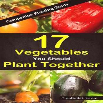 Companion planting guide for 17 different vegetables and its combinations. Covering peppers, squash