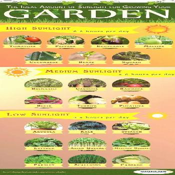 Growing your own vegetables can be so rewarding! It doesn't matter if you grow a few pots or acre