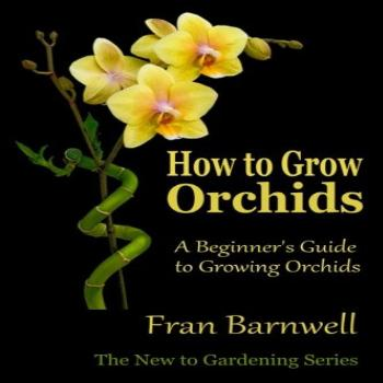 How to Grow Orchids A Beginner's Guide to Growing Orchids