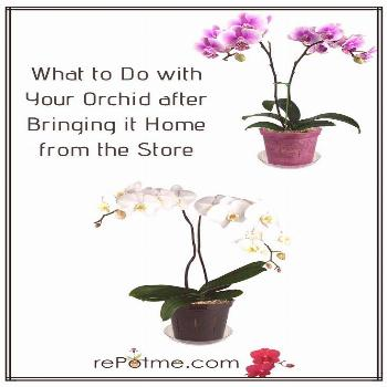 Orchids are exotic and beautiful. They add a certain sophistication and elegance to any home, but t