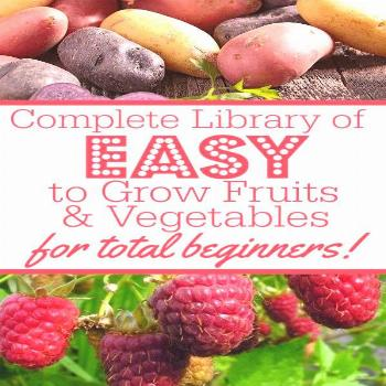 Wondering how to grow yor first veggie garden? Growing your own vegetables can be a daunting task f