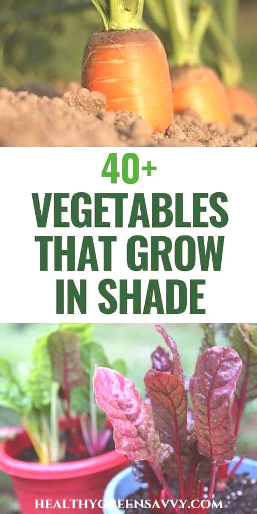 Did you know there are vegetables that grow in shade? If you have a less sunny garden, these 45+ cr
