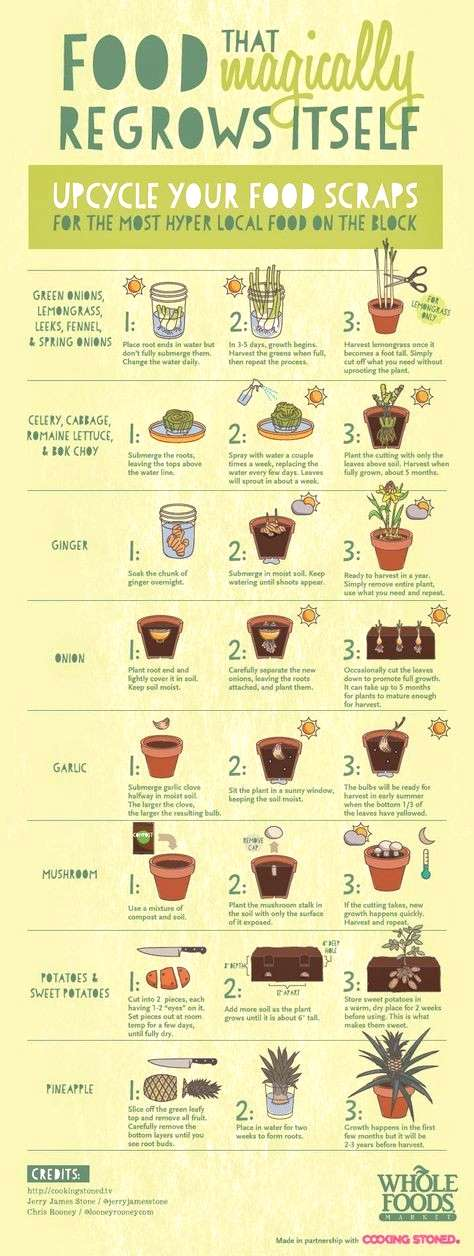 Food That Magically Regrows Itself from Kitchen Scraps Growing vegetables, Plants, Organic vegetabl