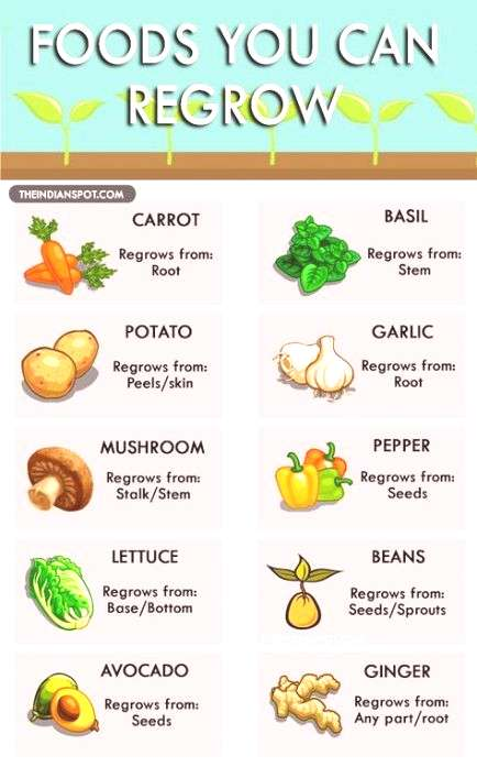 How to grow vegetables from scraps plants 53 Trendy Ideas How to grow vegetables from scraps plants