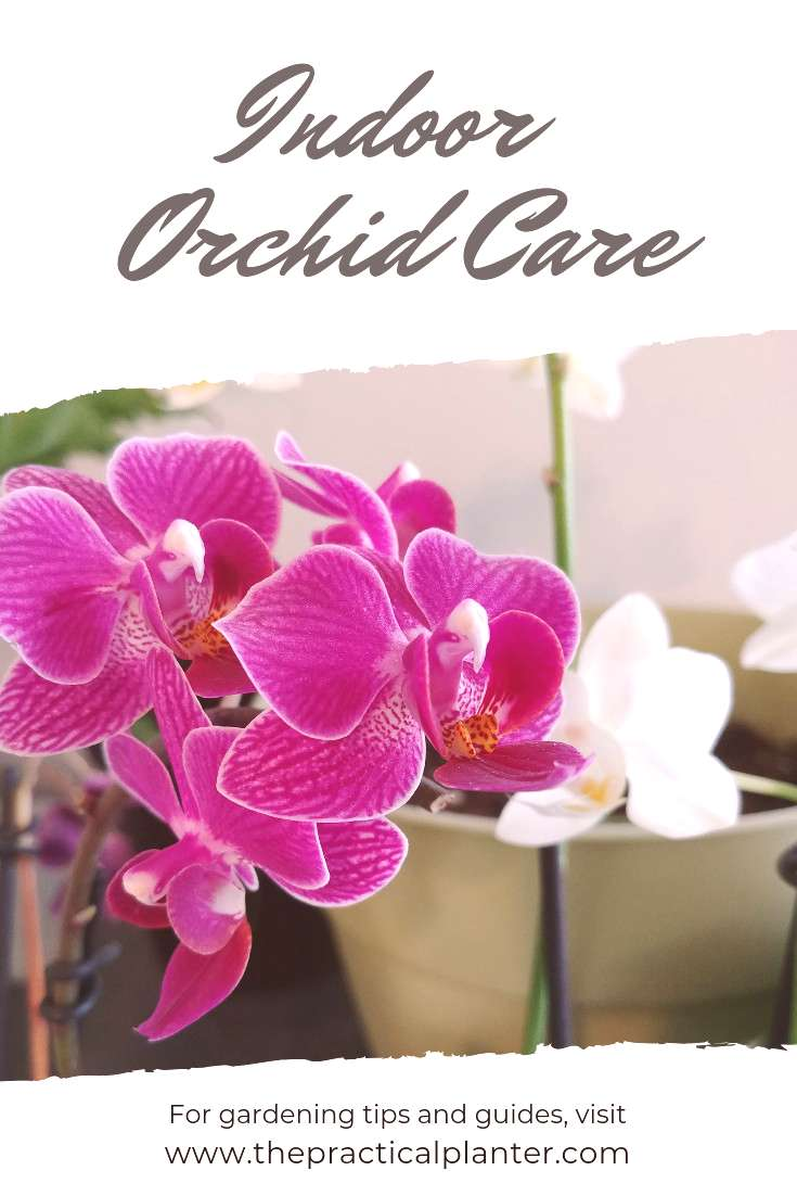 If you've failed at growing orchids at home, it's possible you're following care tips for the wrong