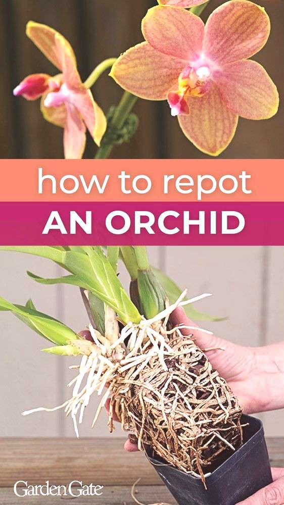 Keep your Orchid Blooming with these Tips!