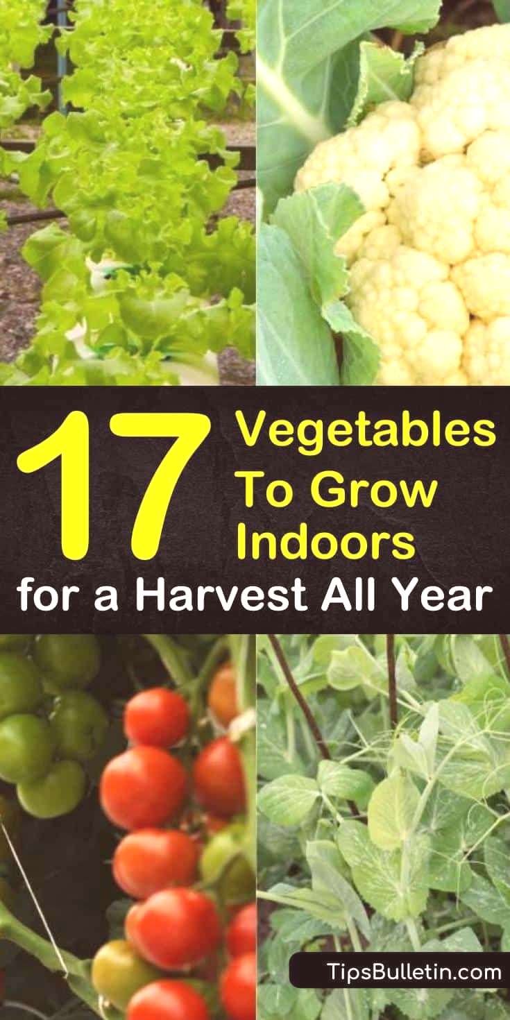 Learn how growing vegetables indoors year round is easy and fun. Even apartments with limited space