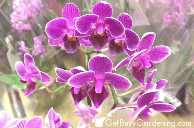 Orchids are easy to care for, and flower every year in the right conditions. They make great housep