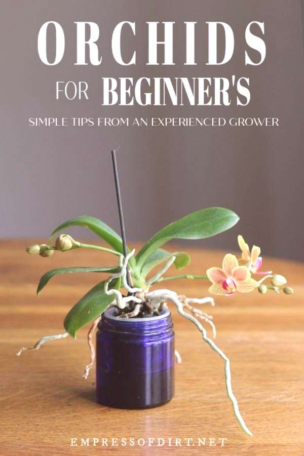 Orchids for beginners: an experienced grower tells how she cares for her orchids and what you need