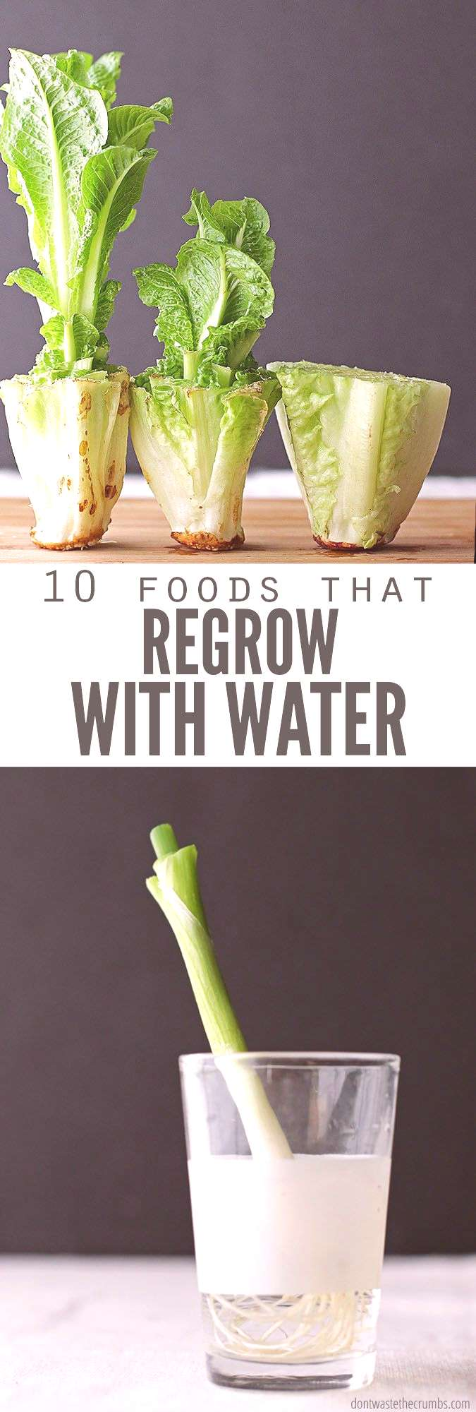 Save money and regrow food scraps in water. Perfect if you don't have room for a vegetable garden &